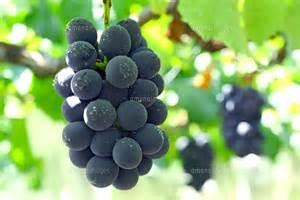 ワインは土壌がいのち