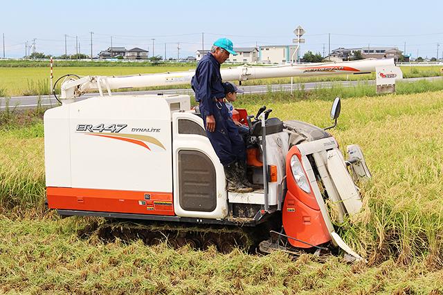 稲を刈りながら宝探しゲームやトラクターの試乗体験も行われましたよ!