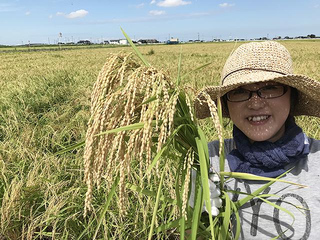 収穫されたこのお米は、各酒蔵へいき「新潟しゅぽっぽ」の醸造が始まります。